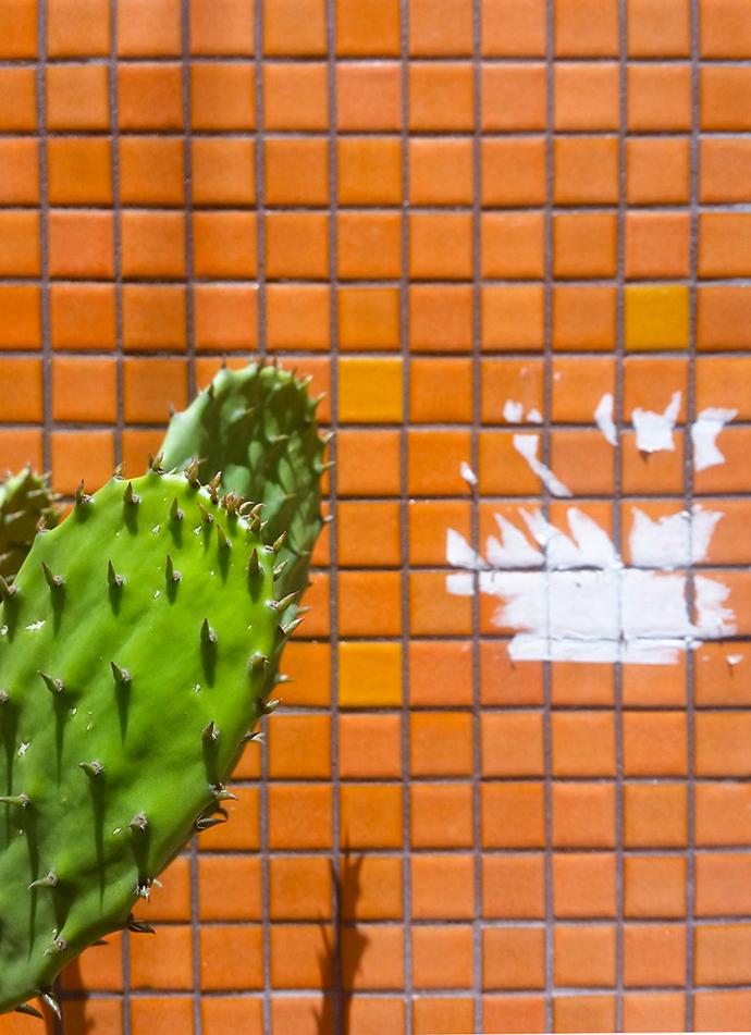 Cactus in LA's Chinatown.
