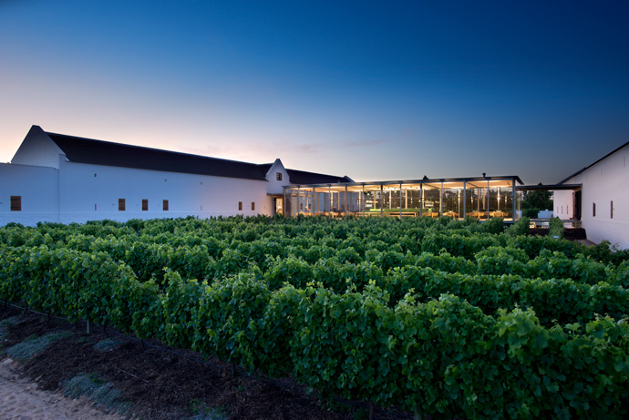The spectacular tasting room is another new space at Babylonstoren, completed just in time for the launch of the farm's Sprankel MCC. The glass-walled tasting room links two cellars. The executing architect was Edwin Swanepoel.