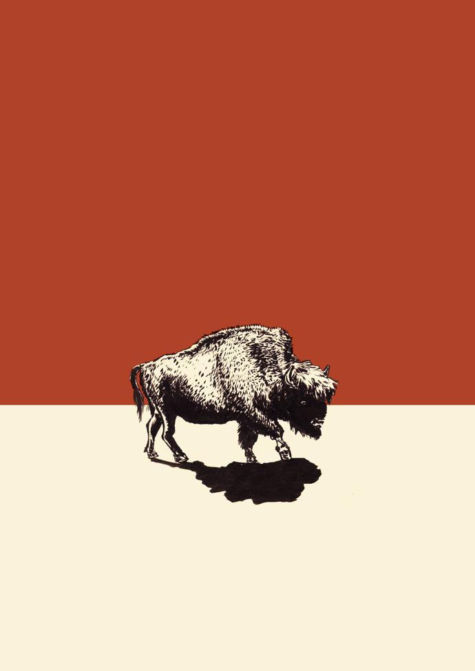 bison_02