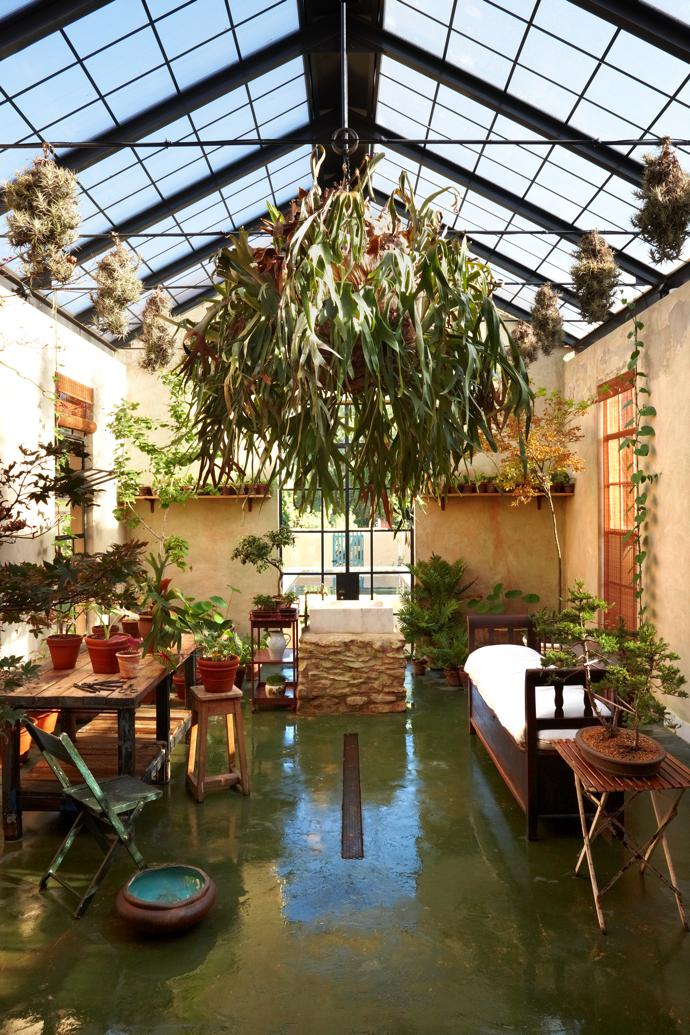 In the limonaia, or citrus conservatory, off the kitchen, a  large stag fern hangs from the glass-and-steel roof. The citrus trees are brought inside in winter, as it gets bitterly cold here in winter. In summer, the limonaia houses a Japanese maple collection, as maples like the cold but dislike the hot Montagu summers.