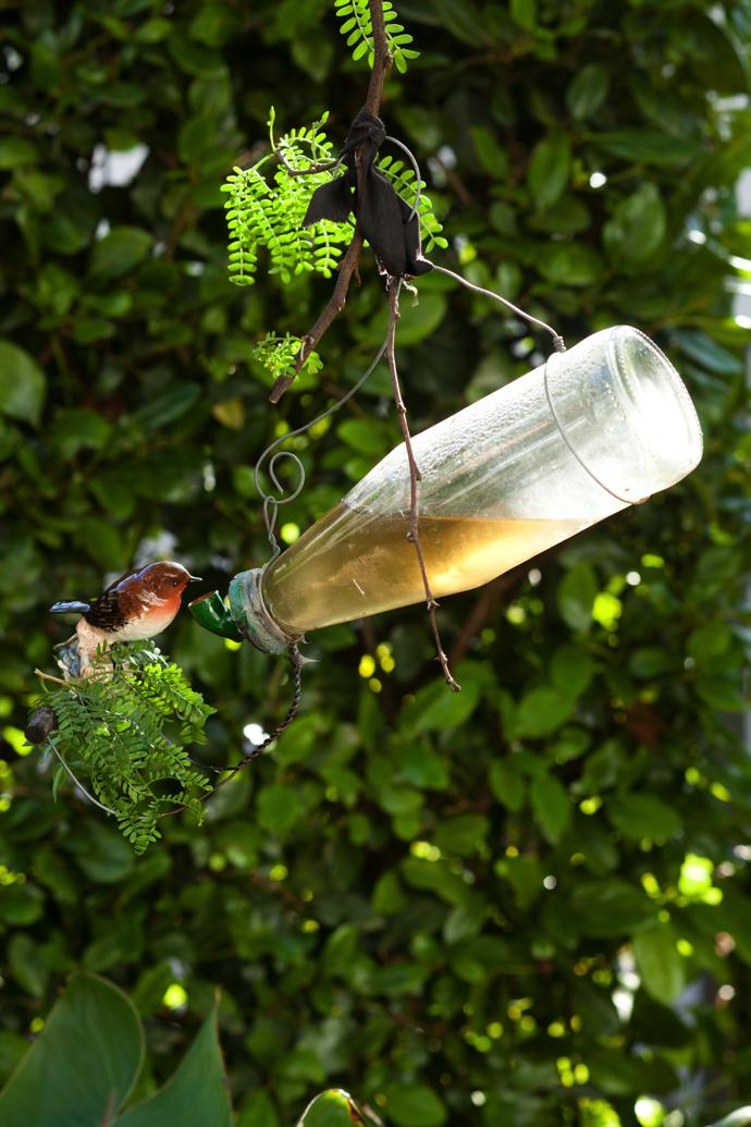 A feeder with sugar water attracts sunbirds and Cape white-eyes to the garden.