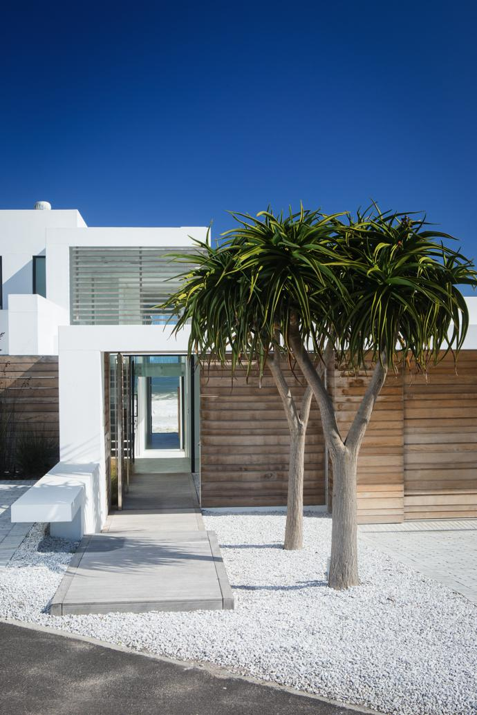 From the back of the house, the sea is visible the moment you open the front door. A pair of tree aloes from Habitat Mature Tree Nursery stand in a bed of crushed granite stone chips, giving the back yard a whitewashed West Coast feel.