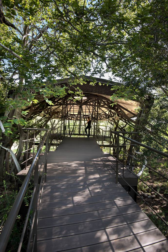 A suspended walkway means visitors never touch the sensitive environment.