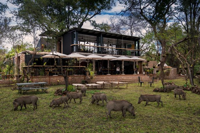 The ambience may be edgy and urban, but grazing warthog in front of Zambezi House are a reminder that it is firmly grounded in the wild.