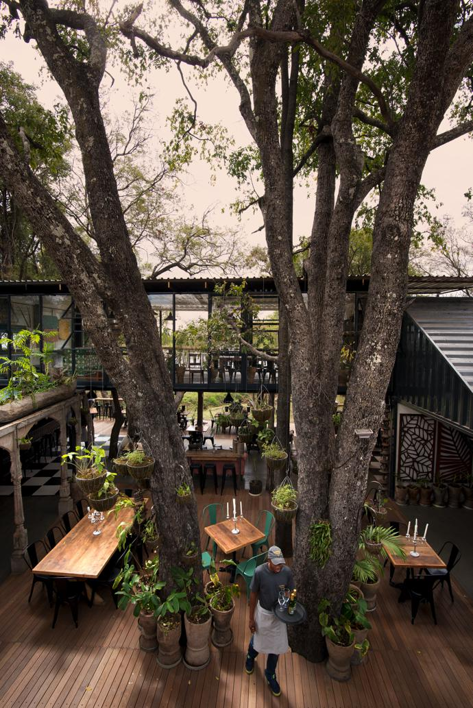 Tall ebony trees appear to grow out of the timber deck that flows from the courtyard onto a wide veranda. The space is filled with plants, some of which grow out of traditional grain stampers and old mokoros sourced from a village in the Zambezi Valley.