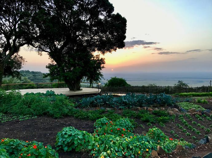 Edible meadows at sunrise, and the Mara basin beyond.