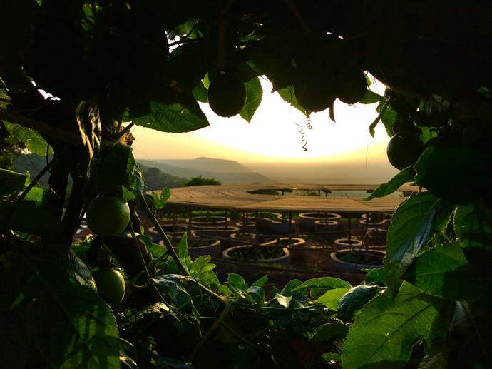 A view through the granadilla arbour.