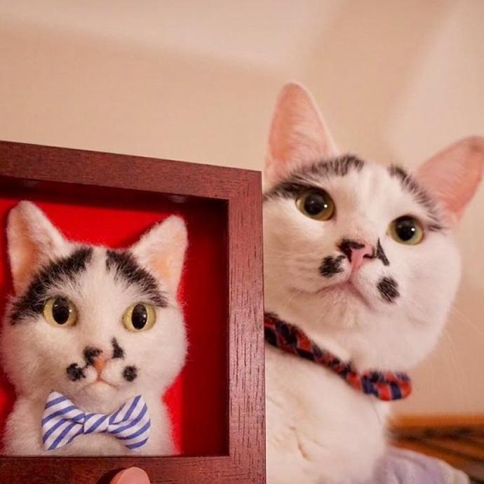 wakuneco cats3