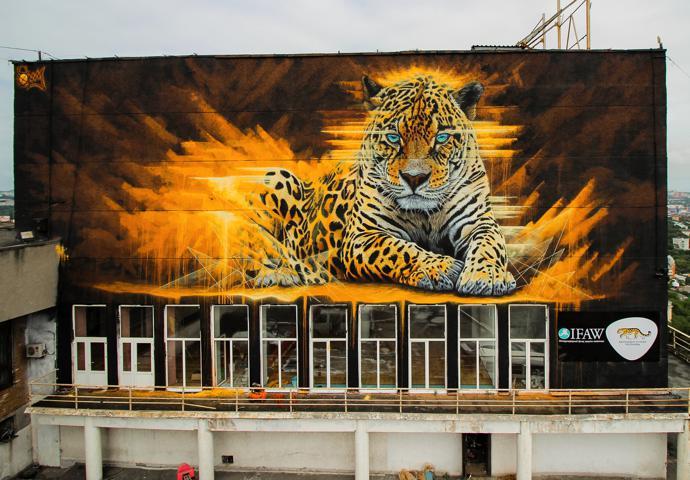 Amur leopard, Vladivostok, Russia.