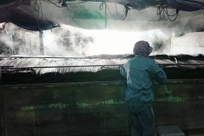 Dying igusa rush for tatami, Fukuoka Prefecture