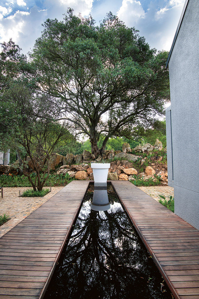 The counterpoint to the expansive view from the front of the cottage over the river is an intimate courtyard with a wild olive tree as its focal point, emphasised by the linear water feature, deck and planter.