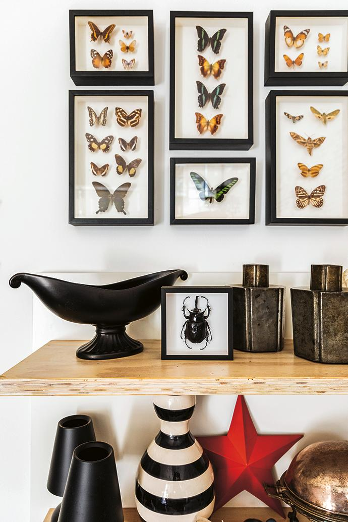 "Fergus's collection of butterflies was a ""lucky find"" hidden inside a drawer in a junk shop."