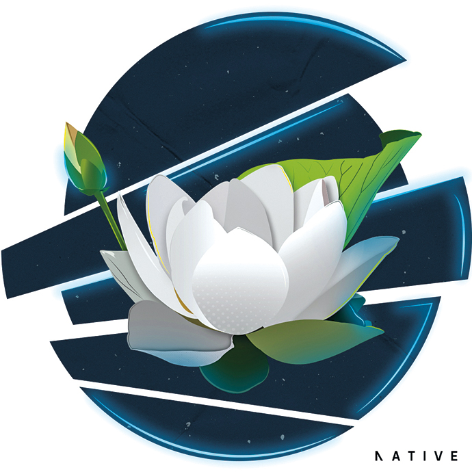 The Beauty of the Lotus