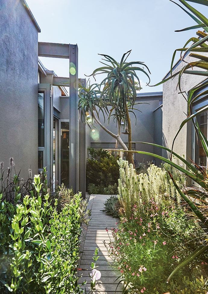 """Courtyards and walkways with lush vegetation create a sense of the house being part of the landscape. """"You see birds right outside your window while you work,"""" says Gillian."""