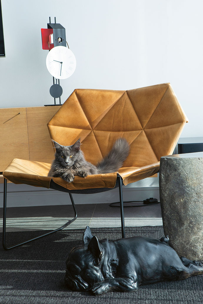 Brie the Maine Coon lounges on a Patricia Urquiola chair from True Design below a Diamantini & Domeniconi cuckoo clock. The side table is from Weylandts and the French Bulldog is by Frank van Reenen.