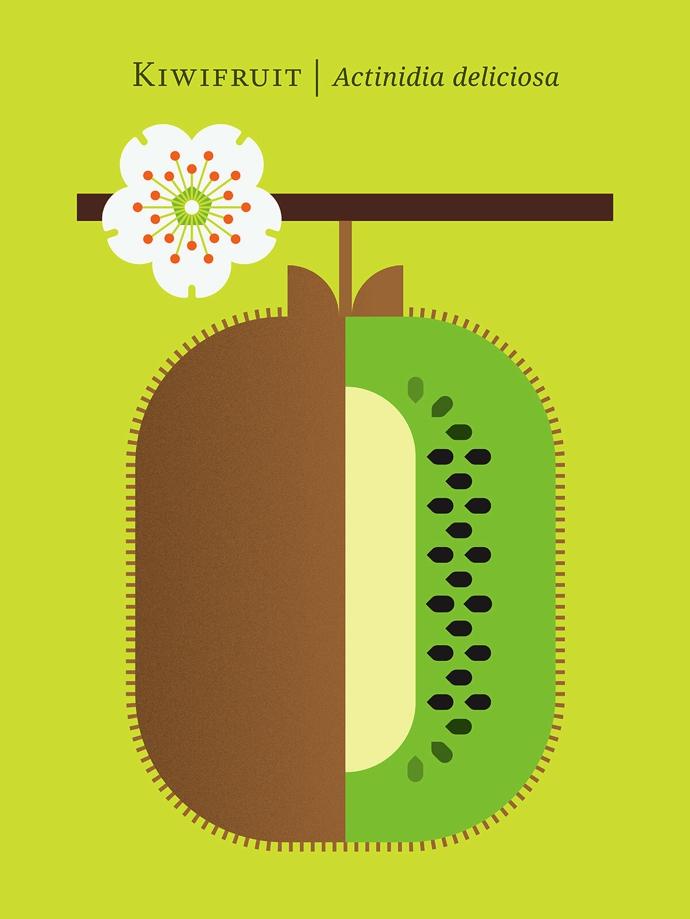 Christopher+Dina+Kiwifruit