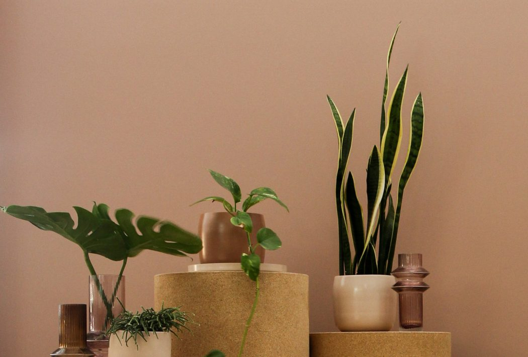 where to buy planters and indoor plants