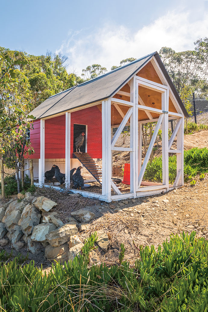 The chicken coop housing the family's chooks was designed by Marielle Ferreira and Sarchen Bassingthwaighte.