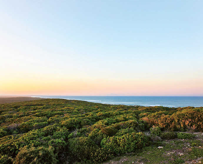 The house's spectacular setting comprises the endless fynbos covering the neighbouring reserve, the Atlantic Ocean and Table Mountain in the distance.