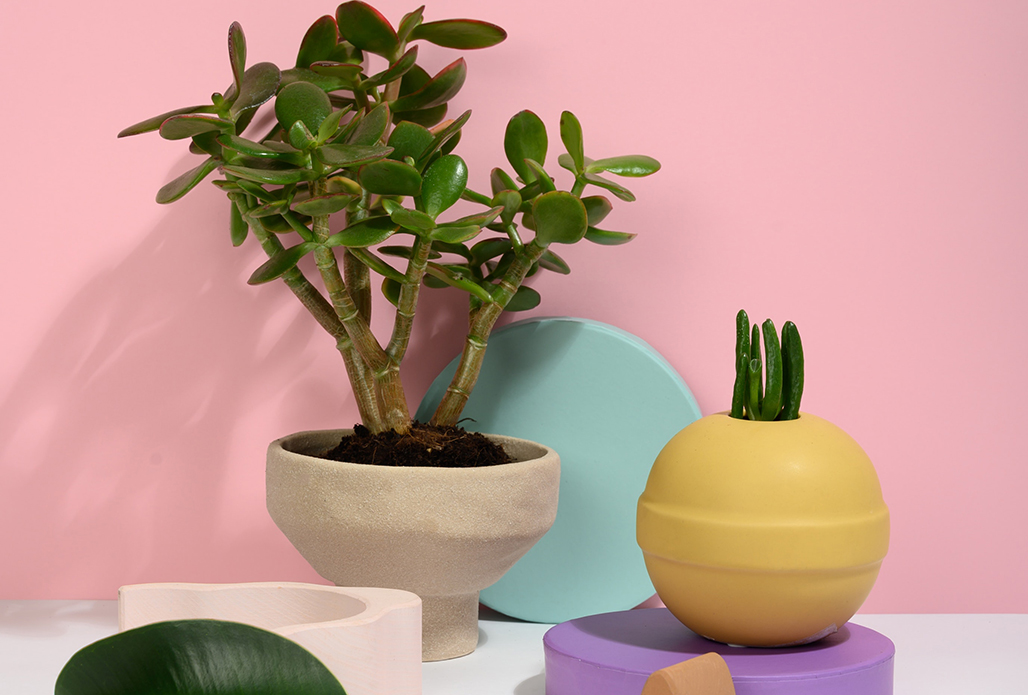 Planters for your home