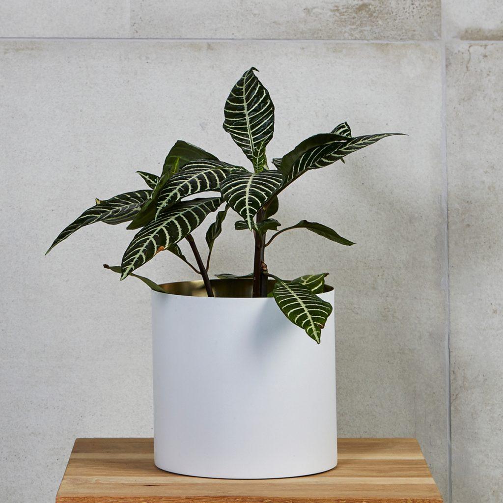 Plantr X VISI Minilux Planter