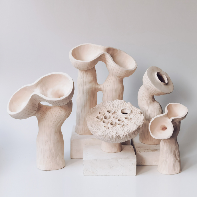 12 SEED POD VESSEL COLLECTION