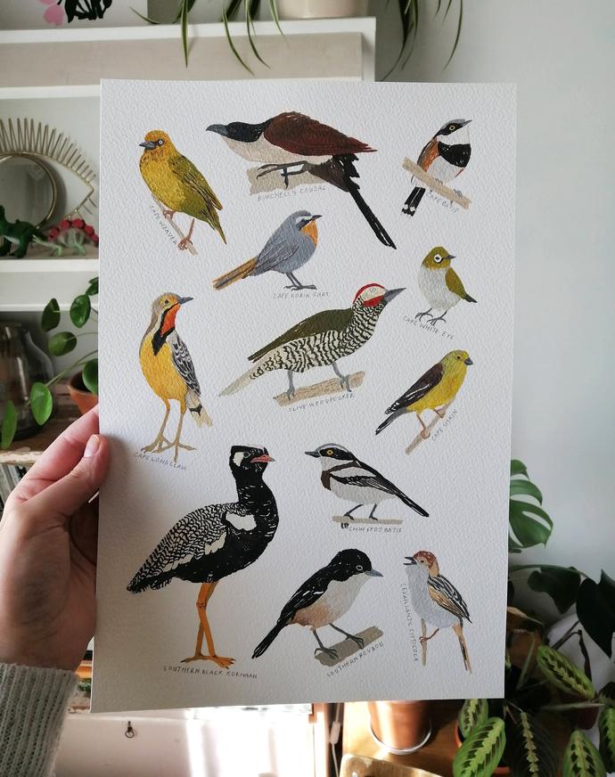 Capebirdlife